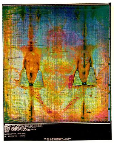 Quad Mosaic Ventral Torso 72dpi.jpg