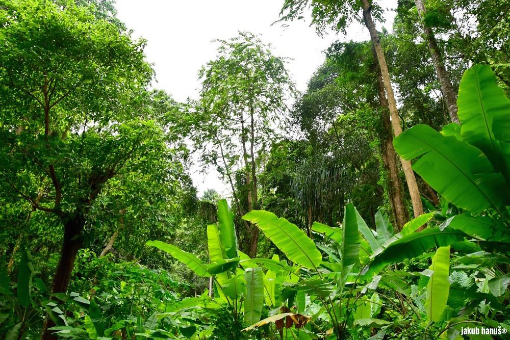 Deštný prales u Ton Sai