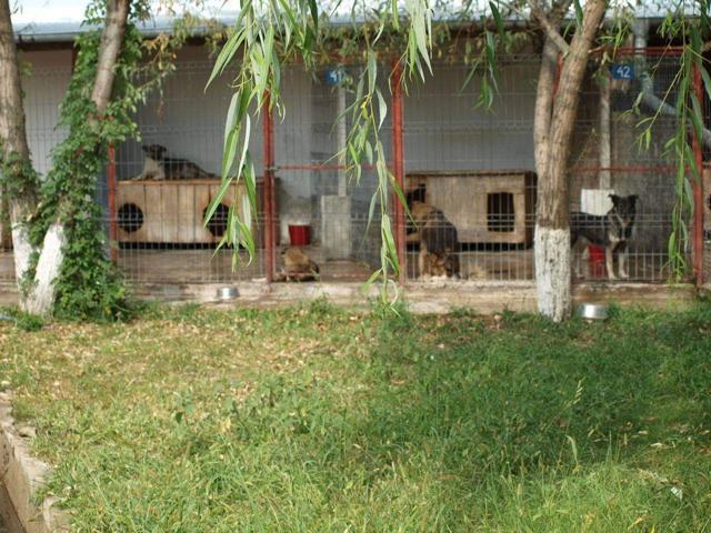 Butimanu Shelter (14).JPG