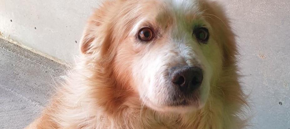 Remi & Dodo: Zwei Hunde, eine Geschichte