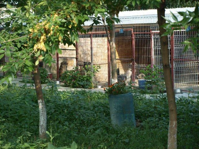 Butimanu Shelter (4).JPG