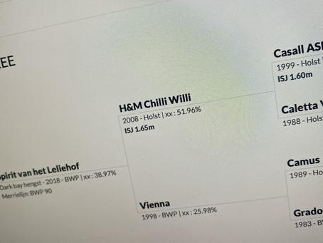 In Memoriam of H&M Chilli Willi