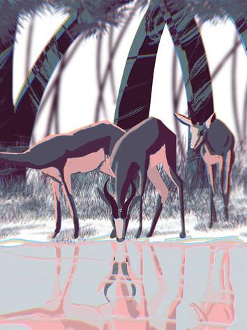 Deer Drinking Water