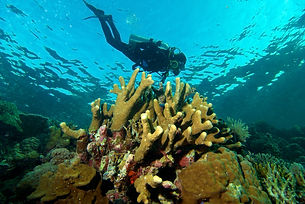 coral reefs and diver in Taka Bonerate National Park