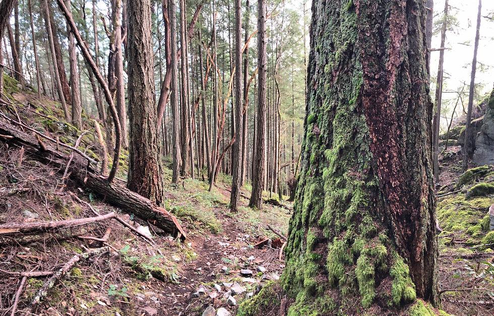 Maple Mountain.JPG