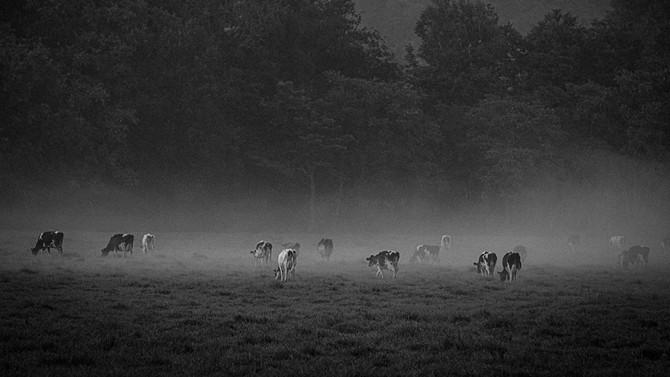 無縁画像絵巻 第1柱『牛モーニング』