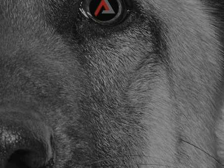 Our dog patrol and the benefits
