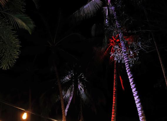 Bushland Beach Tavern