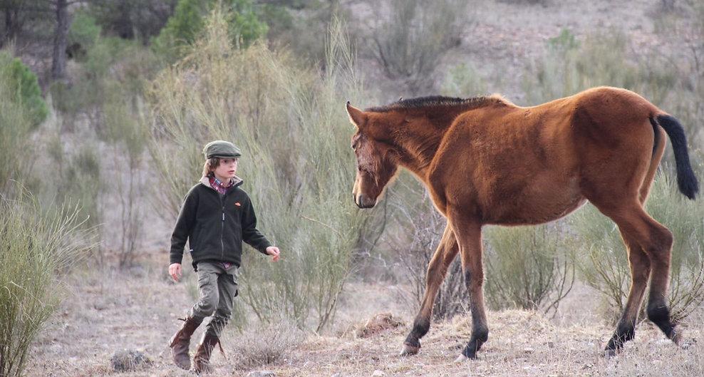 caballo campo