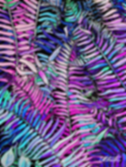 Fern Mid size.png