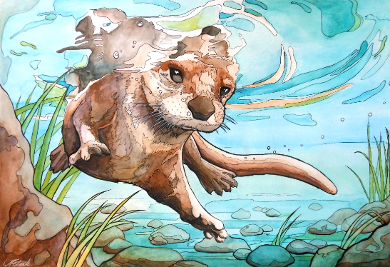 Otter mid size.png
