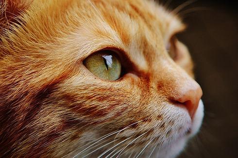 gato cat-1455468_1920.jpg