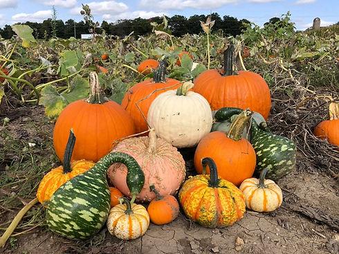 Pumpkin:Gourd cluster.jpg