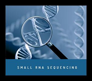 sRNA Sequencing