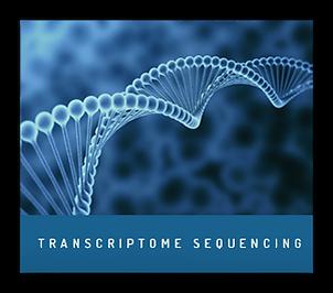 Transcriptome Sequencing RNA-Seq