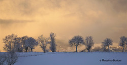 alberi in schiera (1)
