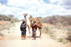 Ethipia, road to Arero