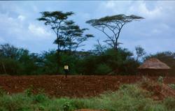Kenya, Sigor
