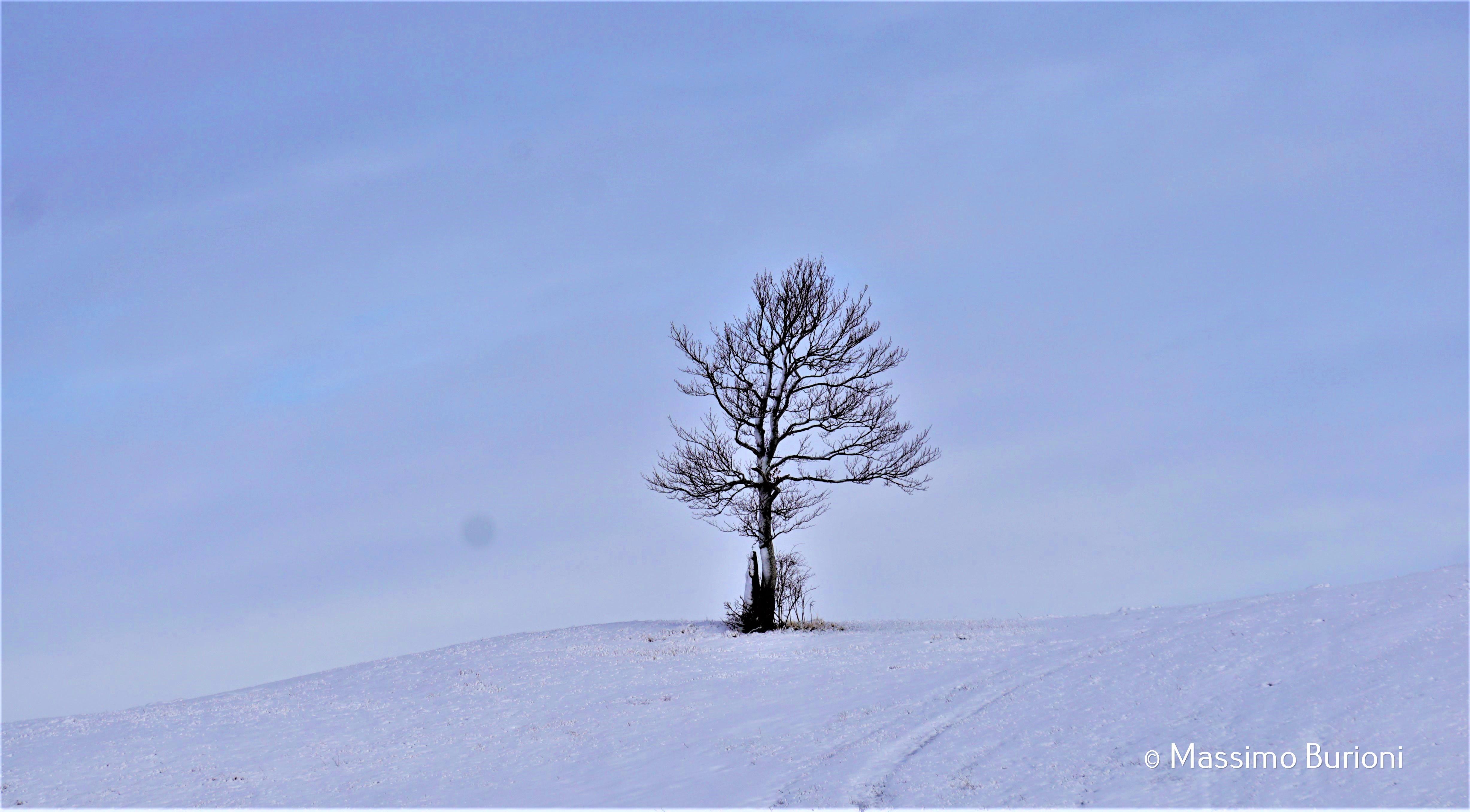 solitario (1)