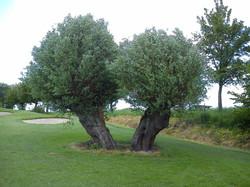 Belgio, Pierpont Golf Club