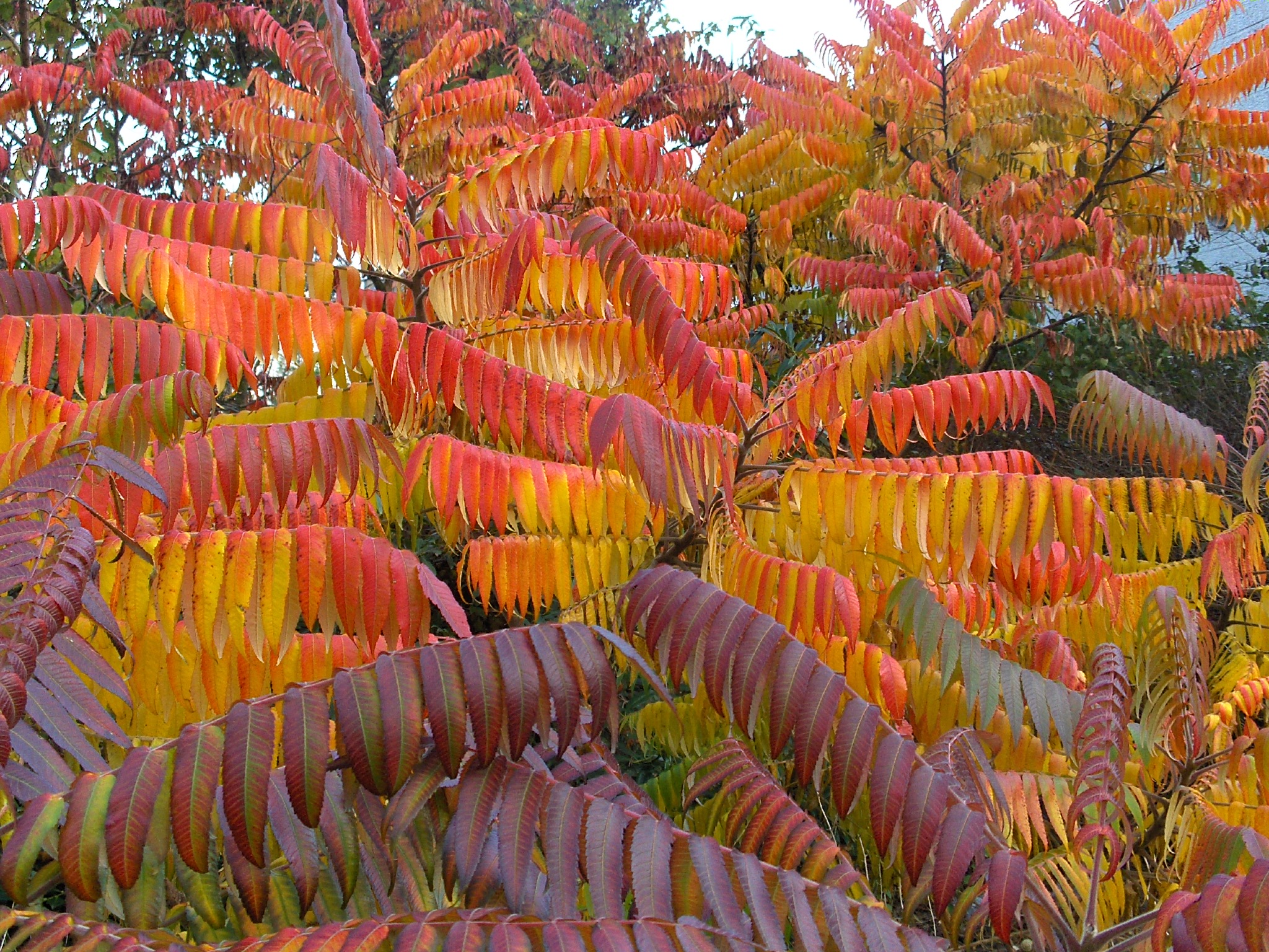 Belgium, Fall in Kraainem