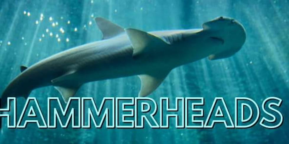 Hammerheads Improv
