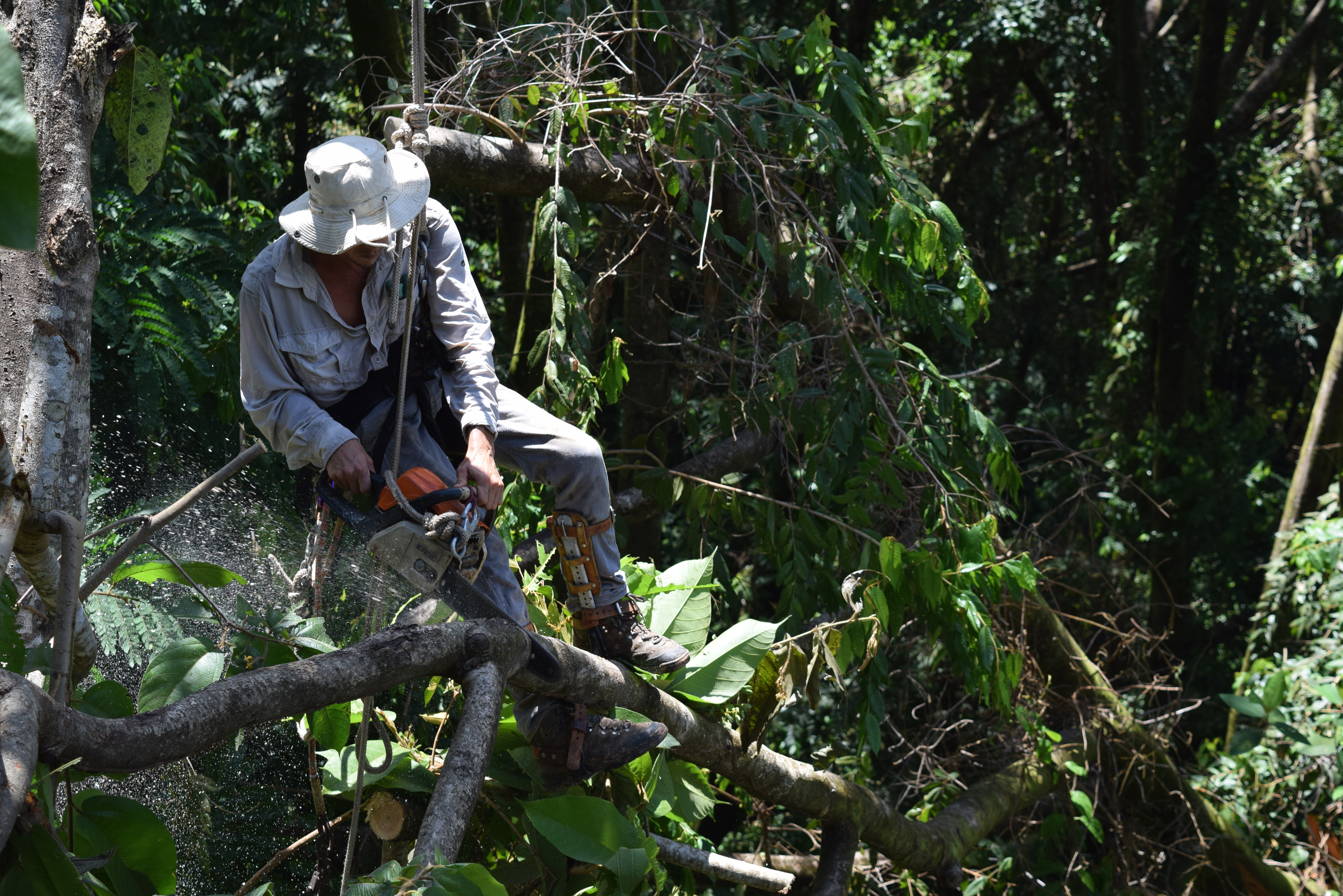 Tree Services Consultation