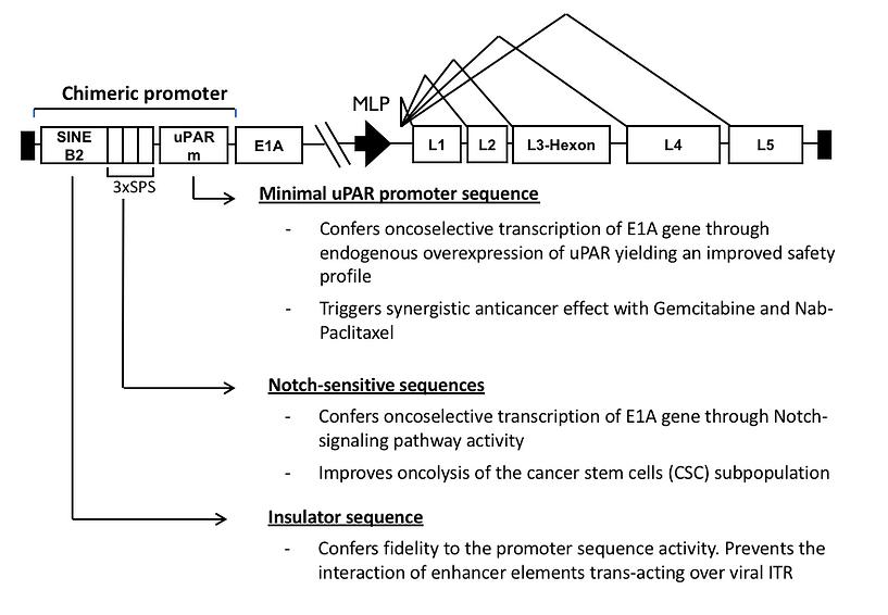 AdNuPARmE1A genome