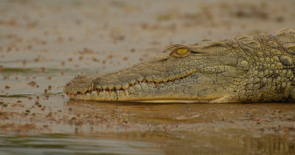 Tailor Made Safaris - St. Lucia - Hippo & Croc Boat Cruise005