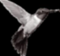 THEBURROW-BIRD-01.png