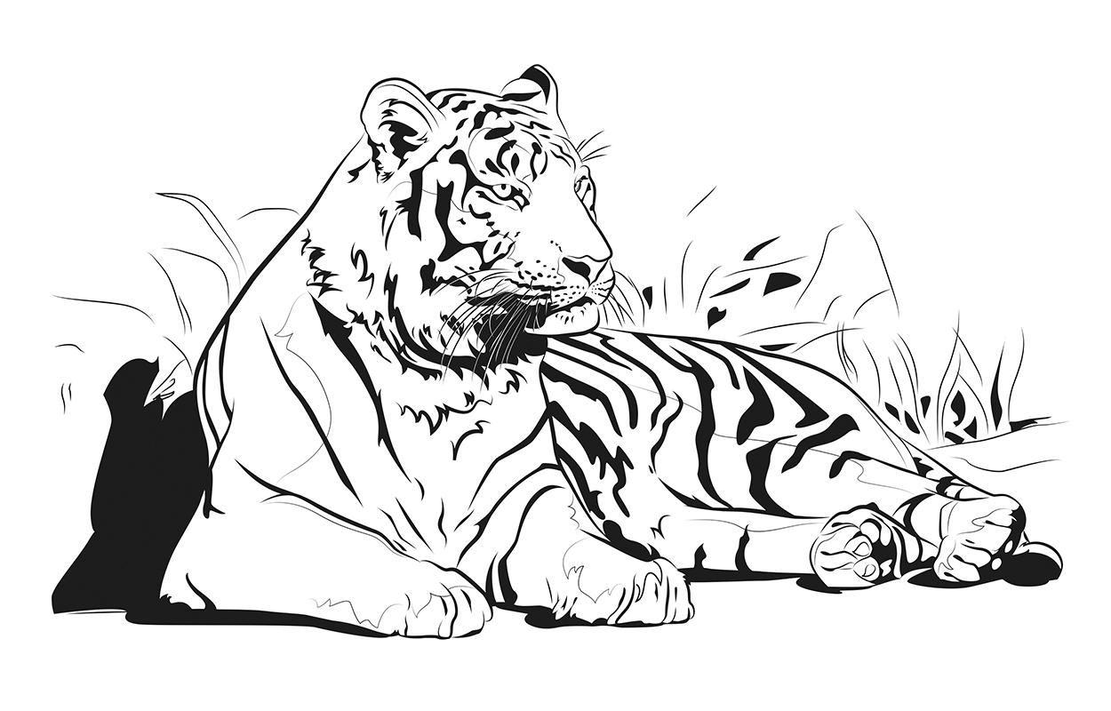 Un Tigre Triste, Cuentos de animales