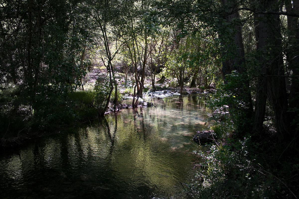 Rio dulce, Pelegrino