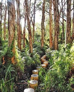 Paperbark Forest.jpg