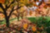 листья .jpg
