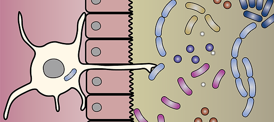 DC sampling the microbiome
