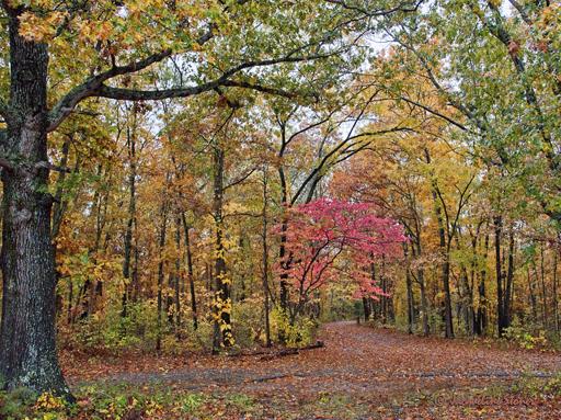 Autumn at Joe Bald Park