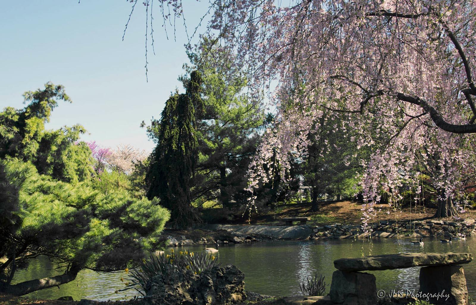 Japanese Stroll Gardens