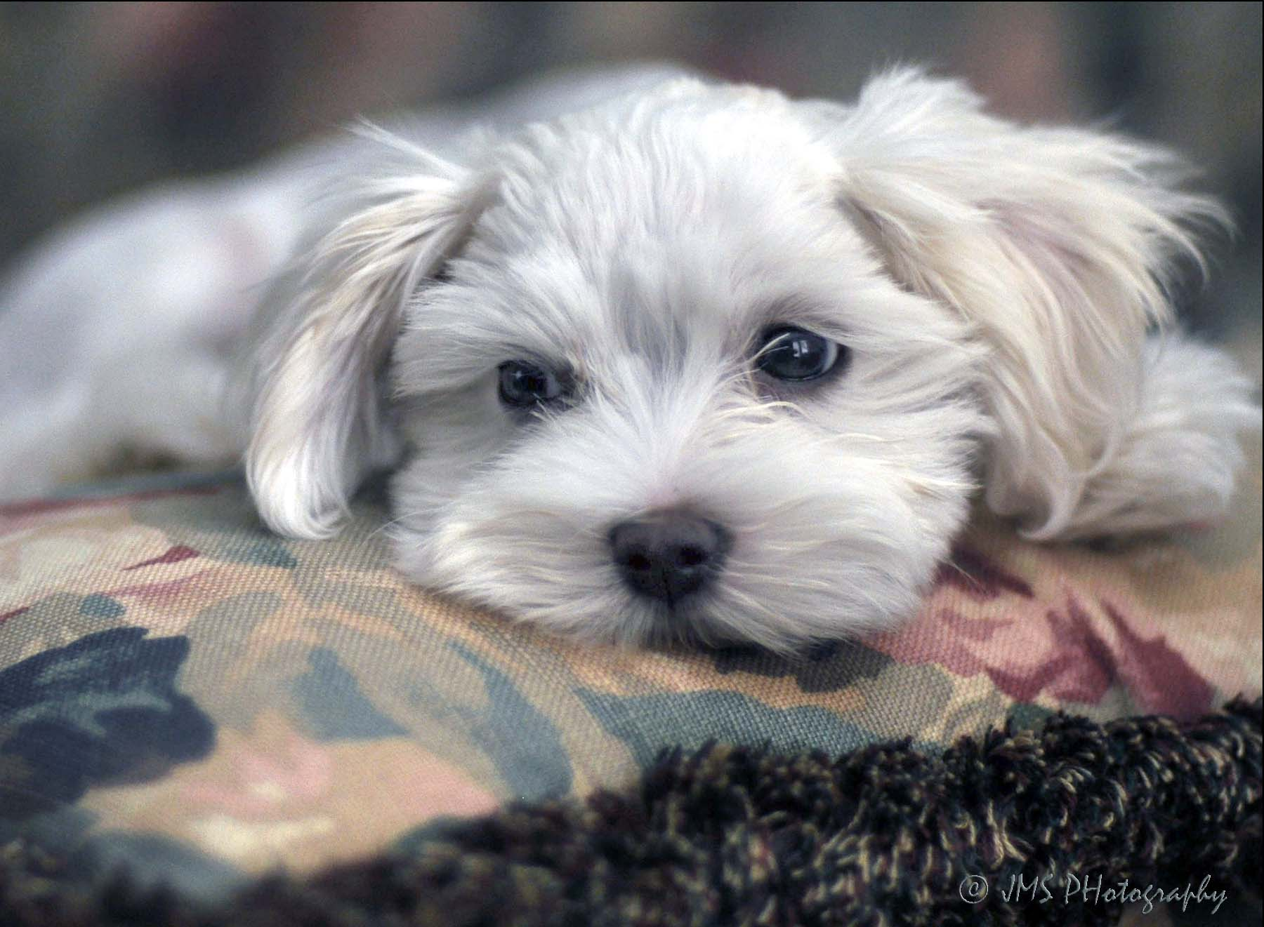 Rascal (a friend's puppy)