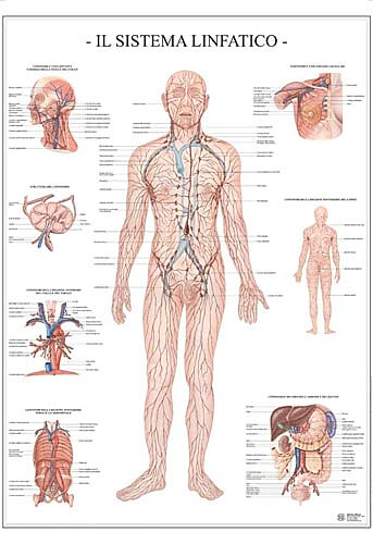 Massaggio Linfodrenante metodo Vodder
