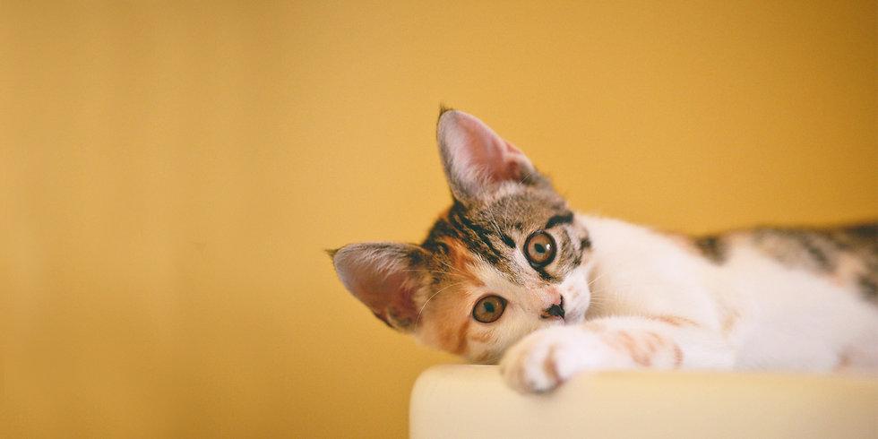 gatito acostadp.jpg