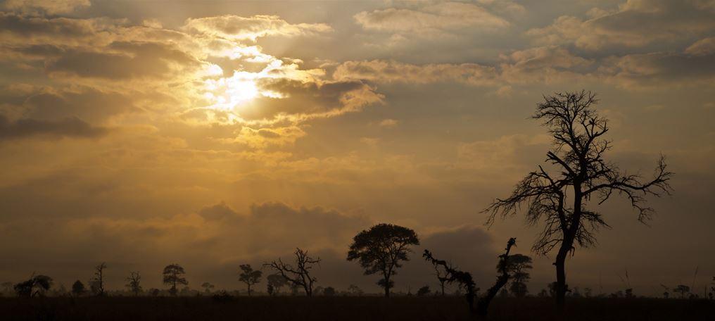 Sonsopkoms oor savanna