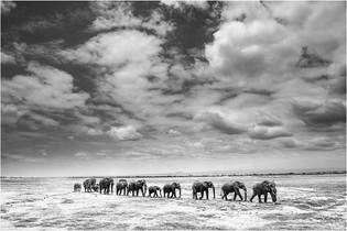 SC-M-Johann Mader-39-COM-Amboseli Elephant Parade.jpg