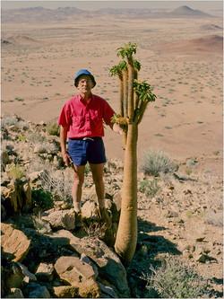 Pachypodium namaquan jjd