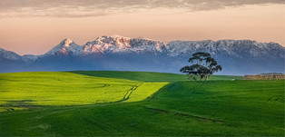 VO-Snr-Johan Greyling_Canola Fields On The Farm.jpg