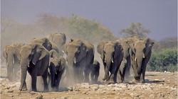 4 African Elephant jjd