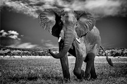 Olifant (Was op National Geographic aang
