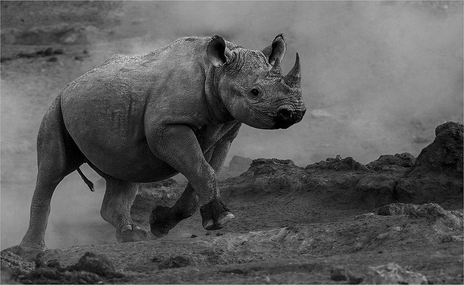 Rhino on the run.jpg