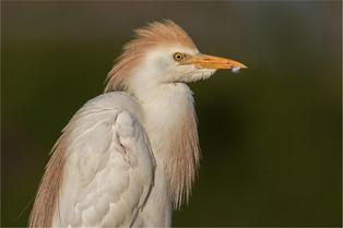 NB-M-Carien Kruger-37-G-Feather Beak.jpg