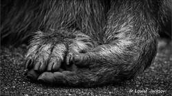 Hand en voet fb