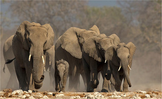 06 Elephant protection.jpg
